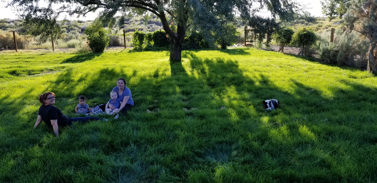Chilling under the shade of a nice olive tree.