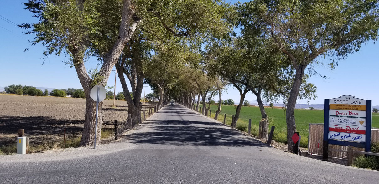 Awesome canopy pruning very long driveway at a ranch in Fallon. Great job guys!