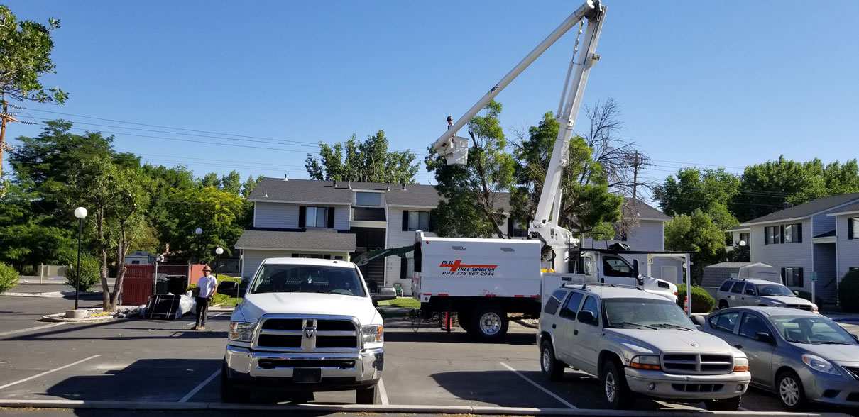 Pruning trees at one of the many apartment complexes we are responsible for.