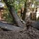 Tree Hazard Assessment