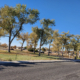 Laura Mills Park in Fallon over 30 large cottonwoods.