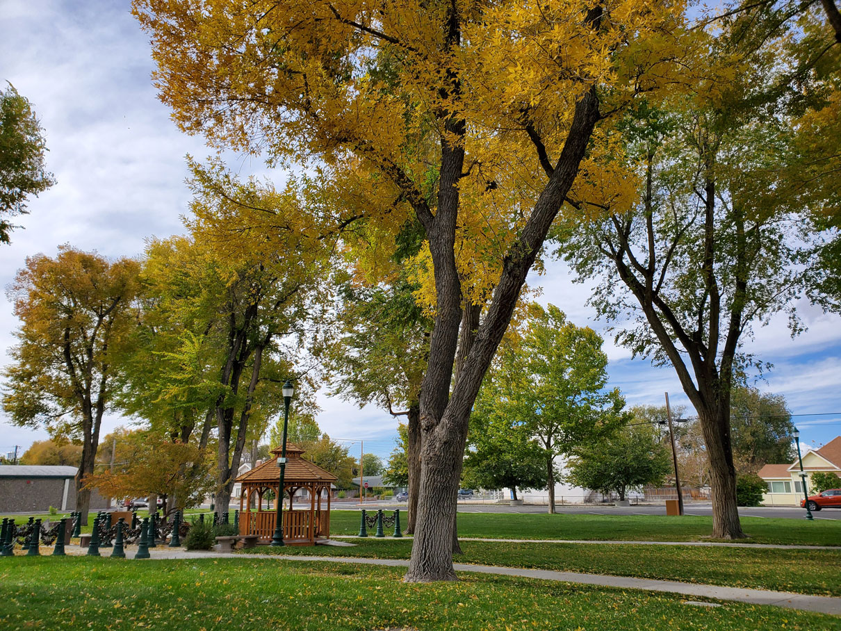 Healthy Trees in Autumn