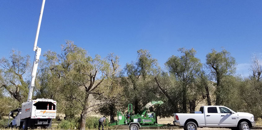 commercial and residential tree pruning and removal